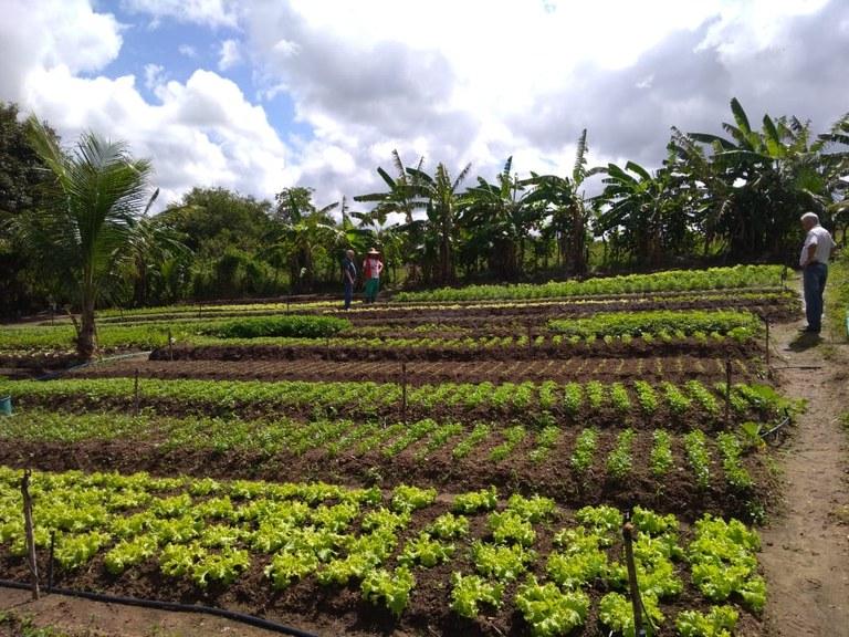 EM SAPÉ – Assentamento  usa energia solar em irrigação e reduz custos na produção de hortaliças