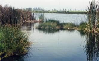 Zona Reservada Los Pantanos de Villa