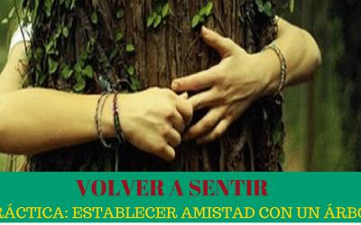 VOLVER A SENTIR: Práctica establecer Amistad con un Árbol.