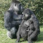 Gestoría Henares familia_gorila