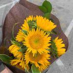 Sunflower is the Season