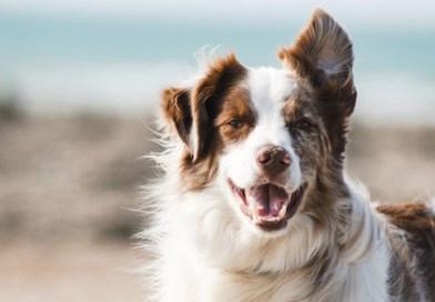 Arthritis bei Hunden