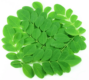 "<span class=""entry-title-primary"">Moringa</span> <span class=""entry-subtitle"">Eine kritische Betrachtung</span>"