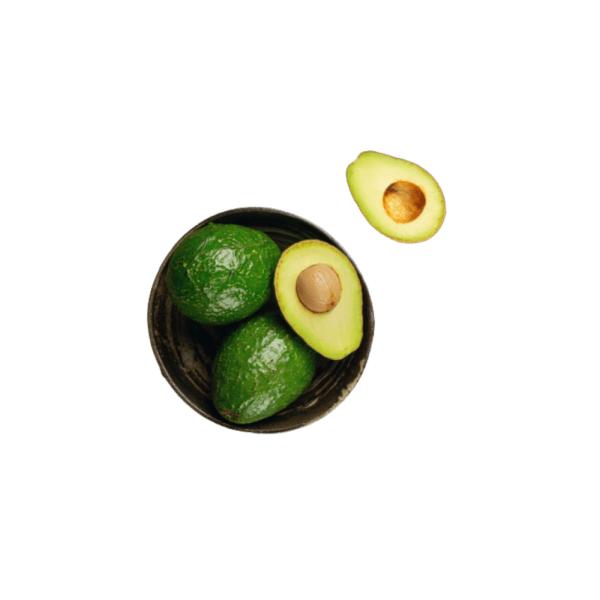Avocadobaum 3