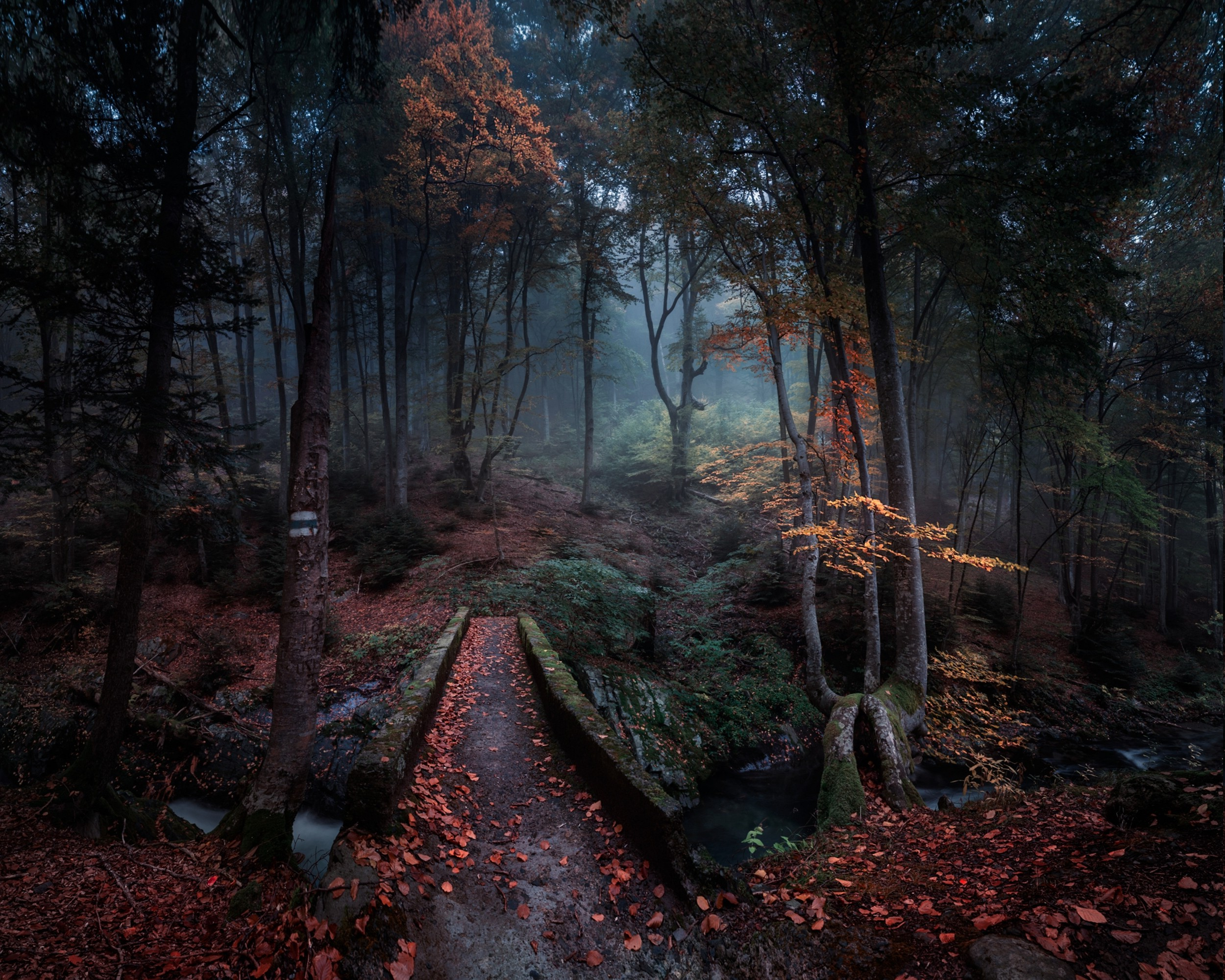Central Park In Fall Wallpaper Wallpaper 2500x2000 Px Bulgaria Creeks Fall Forest