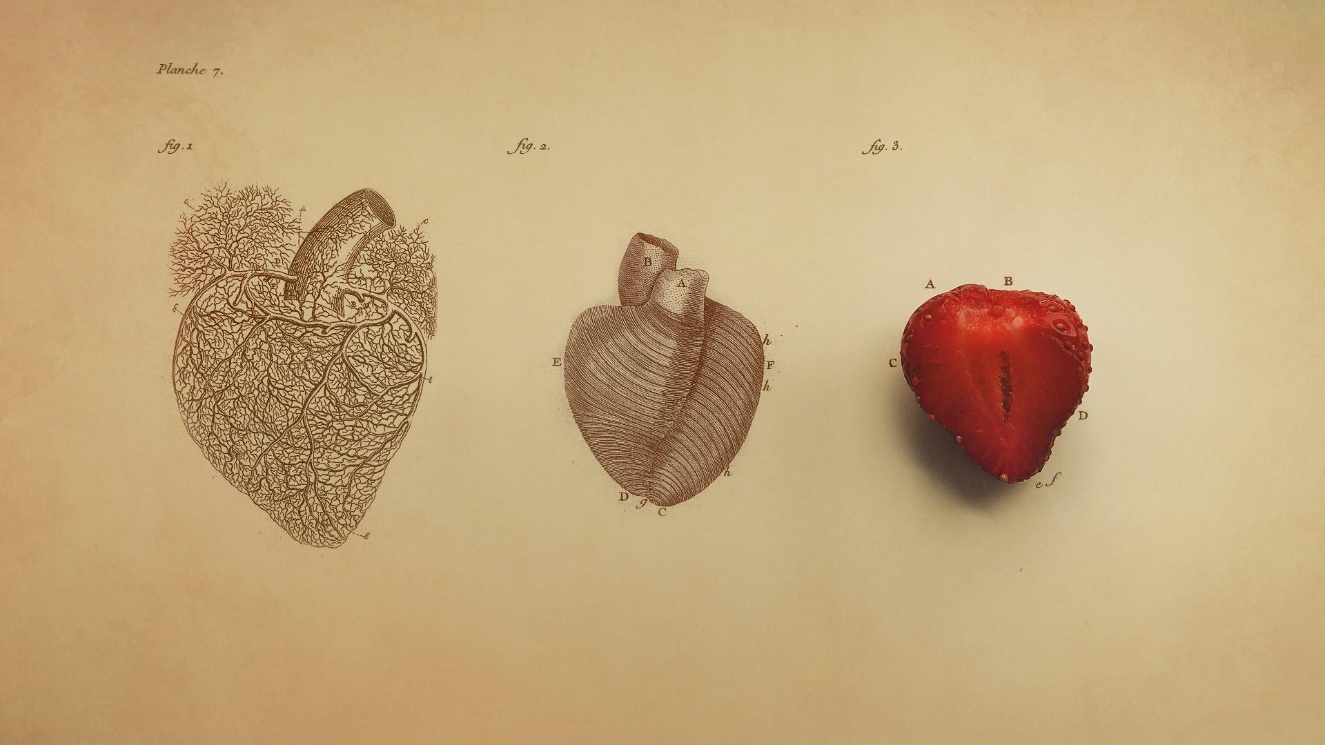 vintage red real heart diagram 2003 dodge grand caravan radio wiring wallpaper drawing digital art simple background