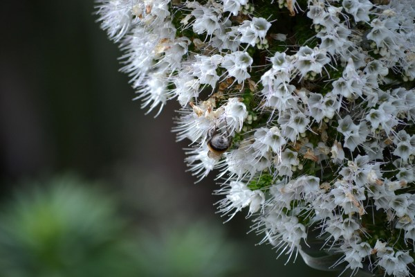 Wallpaper Nature Plants Winter Branch Insect Frost White Flowers Pollen Blossom