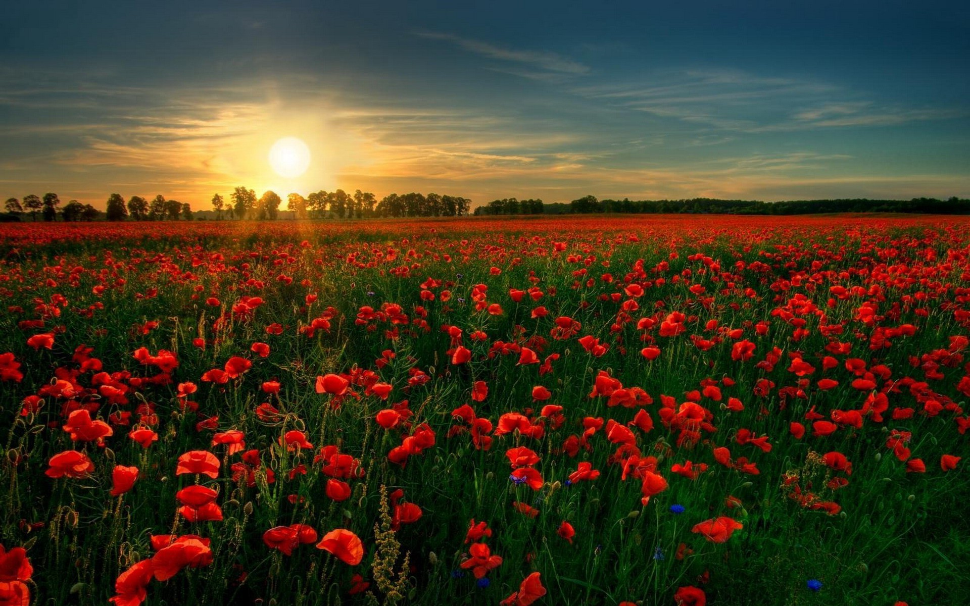 Sfondi  paesaggio tramonto fiori natura cielo Sole