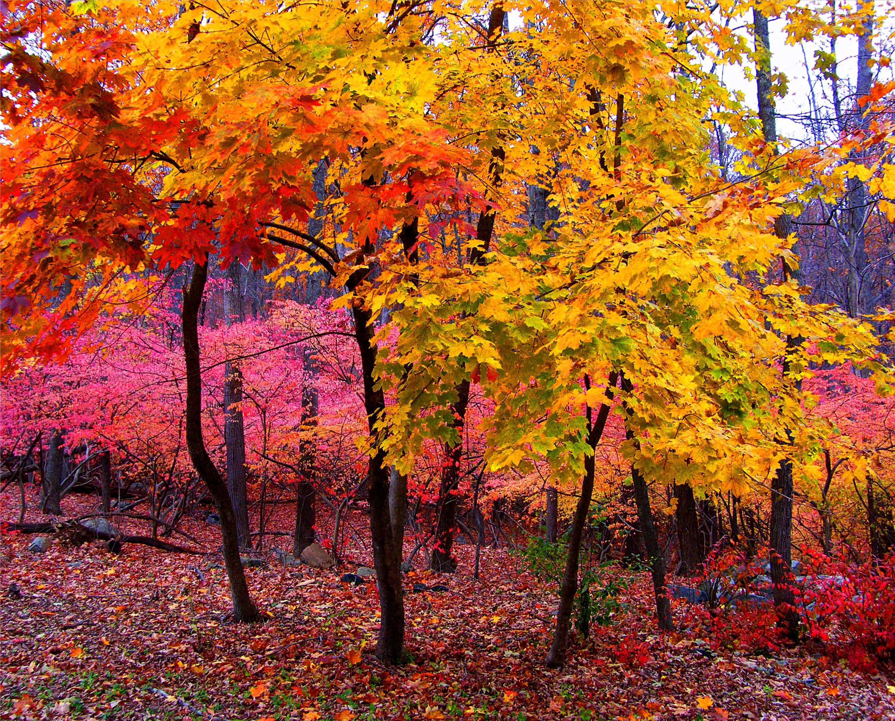 Malvorlagen Bäume Herbst
