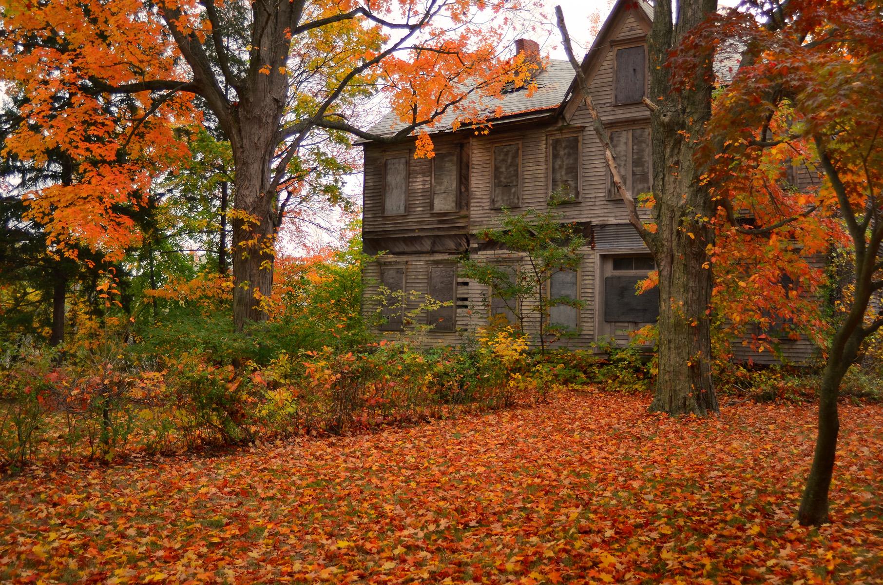 4k Central Park In The Fall Wallpaper Sfondi Luce Del Sole Paesaggio Autunno Le Foglie
