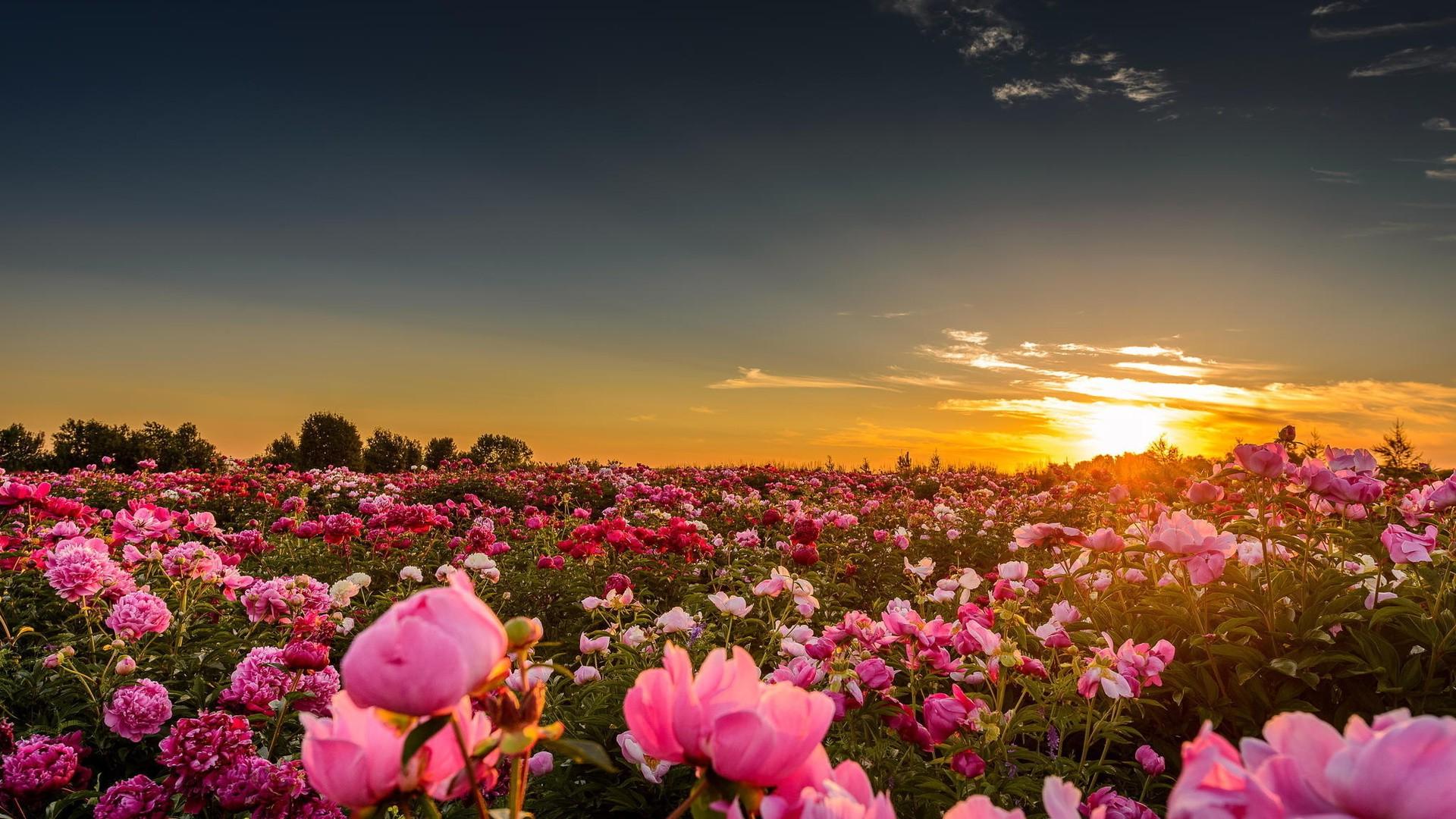 Cute Poppy 1080p Wallpaper Fond D 233 Cran Lumi 232 Re Du Soleil Paysage Le Coucher Du