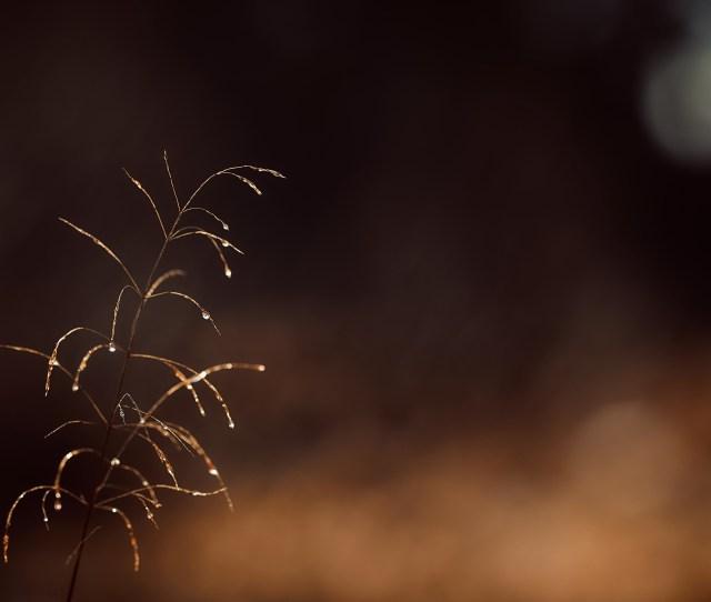 Sunlight Night Grass Sky Branch Evening Atmosphere Backlighting Midnight Light Carlzeiss Darkness Twig Computer Wallpaper Close