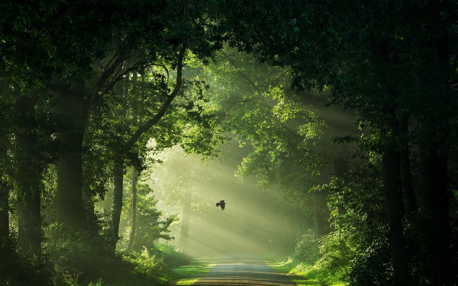 Wallpaper Sunlight Trees Landscape Forest Birds