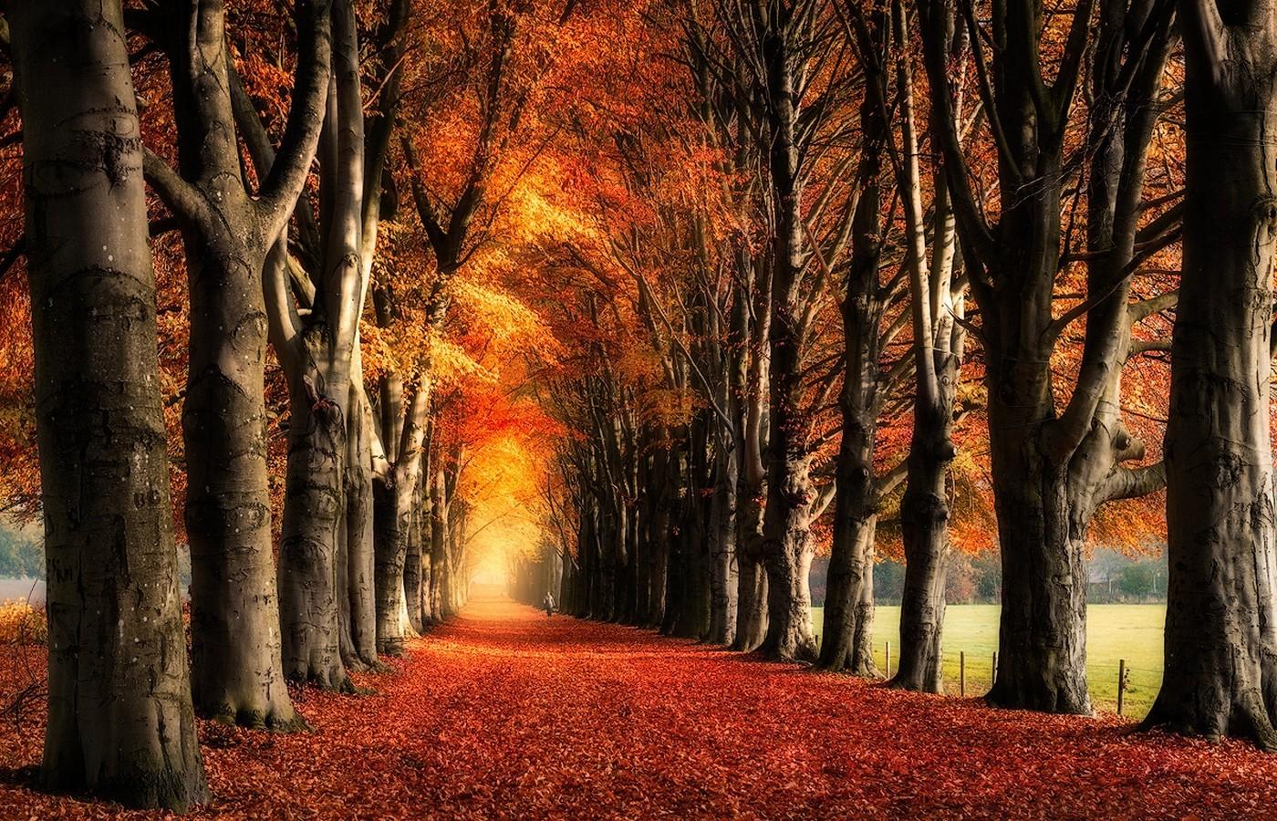 Free Fall Season Wallpapers Wallpaper Sunlight Trees Landscape Fall Leaves