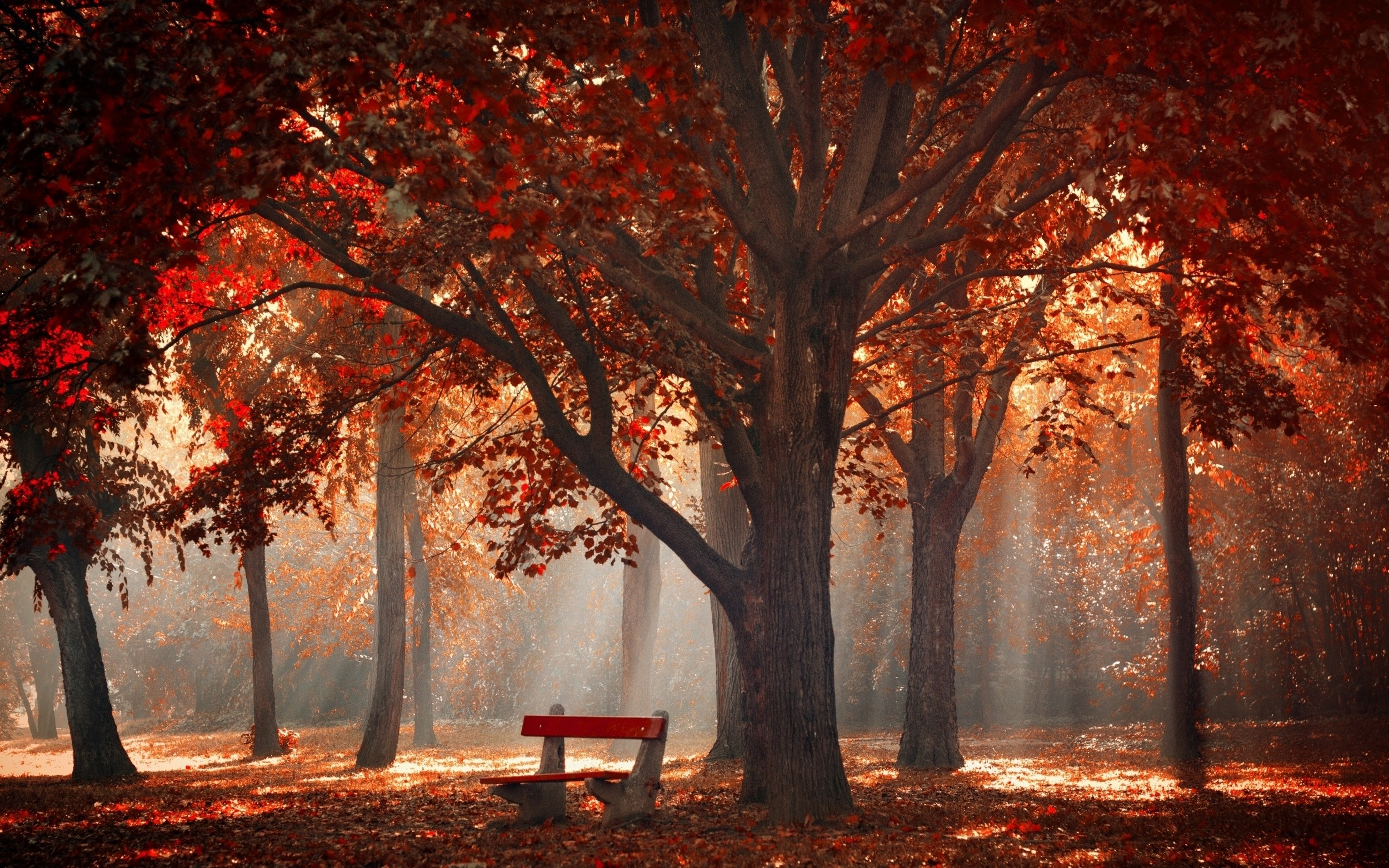 Fall Season Quotes Wallpapers Wallpaper Sunlight Trees Landscape Forest Fall