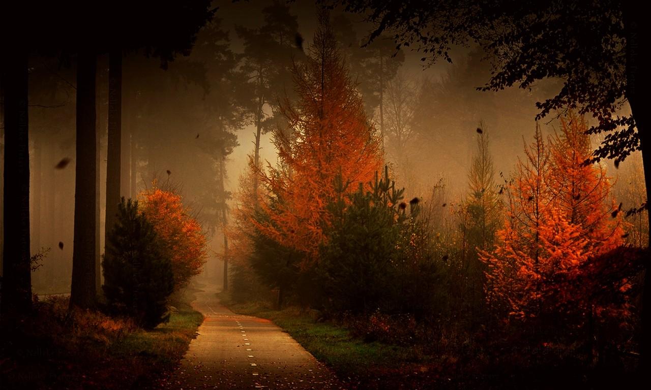 Fall Leaves Falling Wallpaper วอลเปเปอร์ แสงแดด ต้นไม้ แนวนอน ป่า ตก กลางคืน