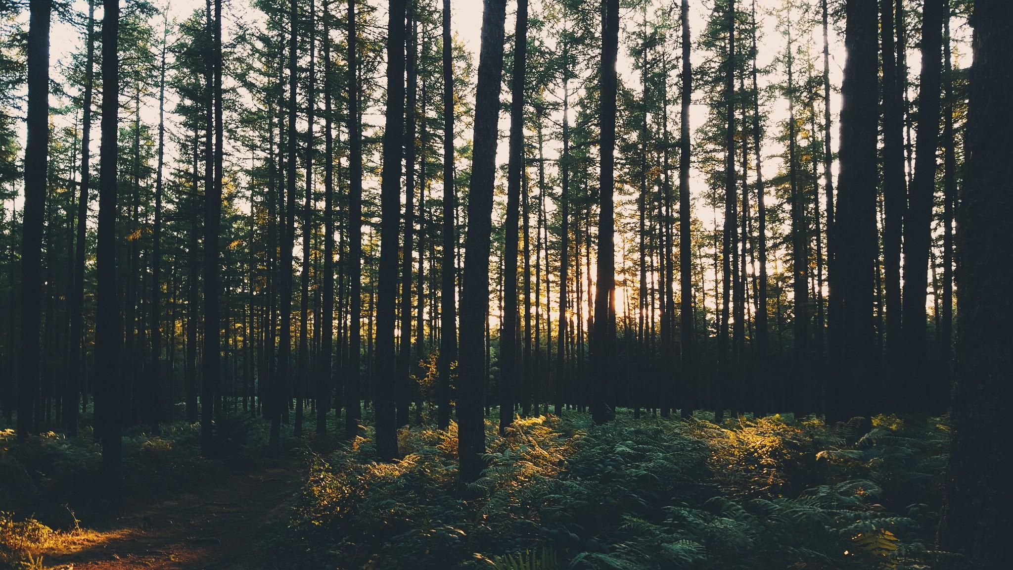Fondos de pantalla  luz de sol rboles paisaje bosque