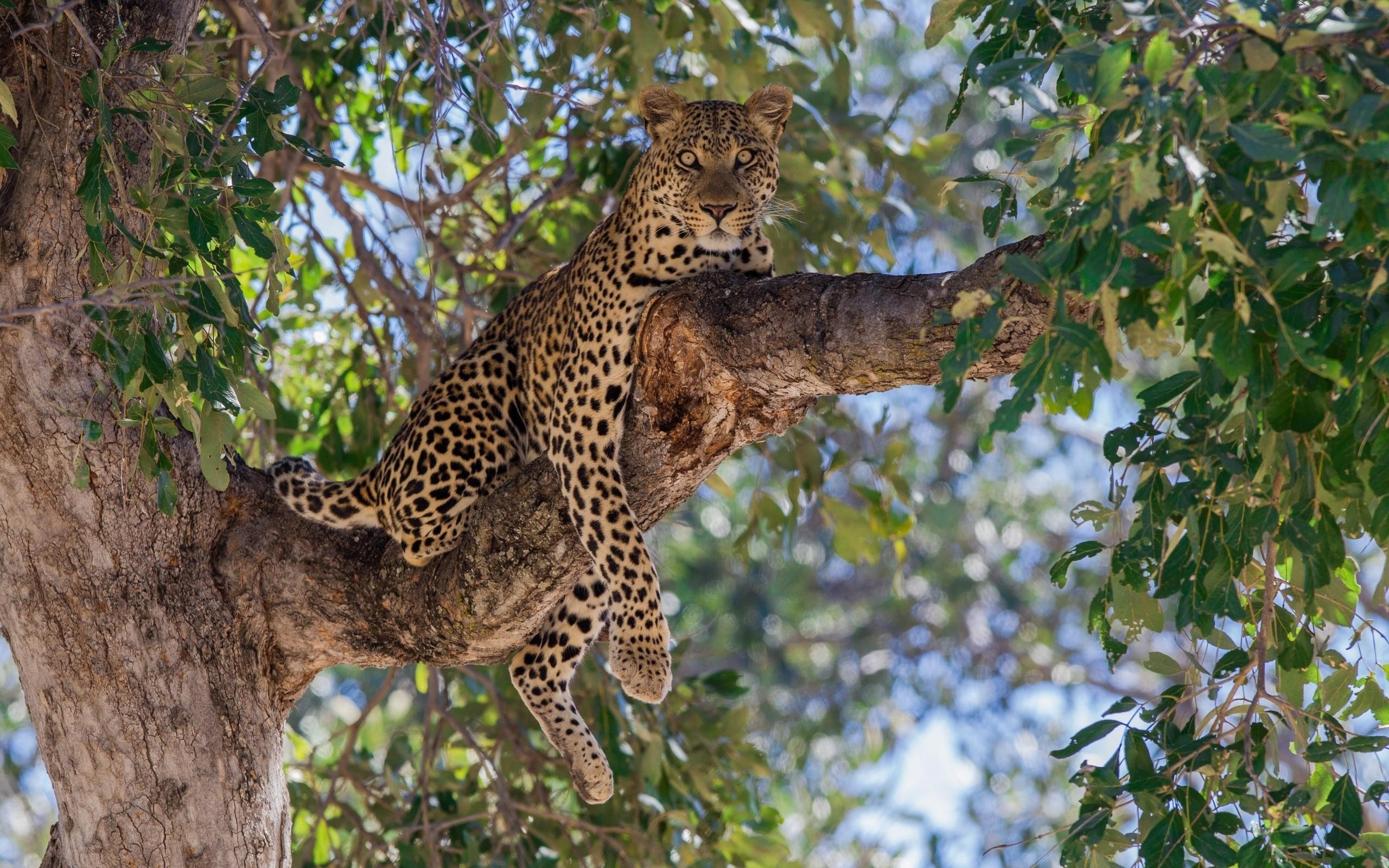 Wallpaper Trees Animals Nature Branch Wildlife Big