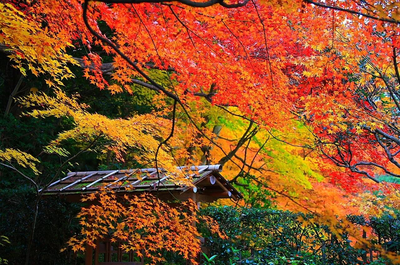 Full Screen Desktop Fall Wallpaper Sfondi Alberi Paesaggio Autunno Giardino Natura