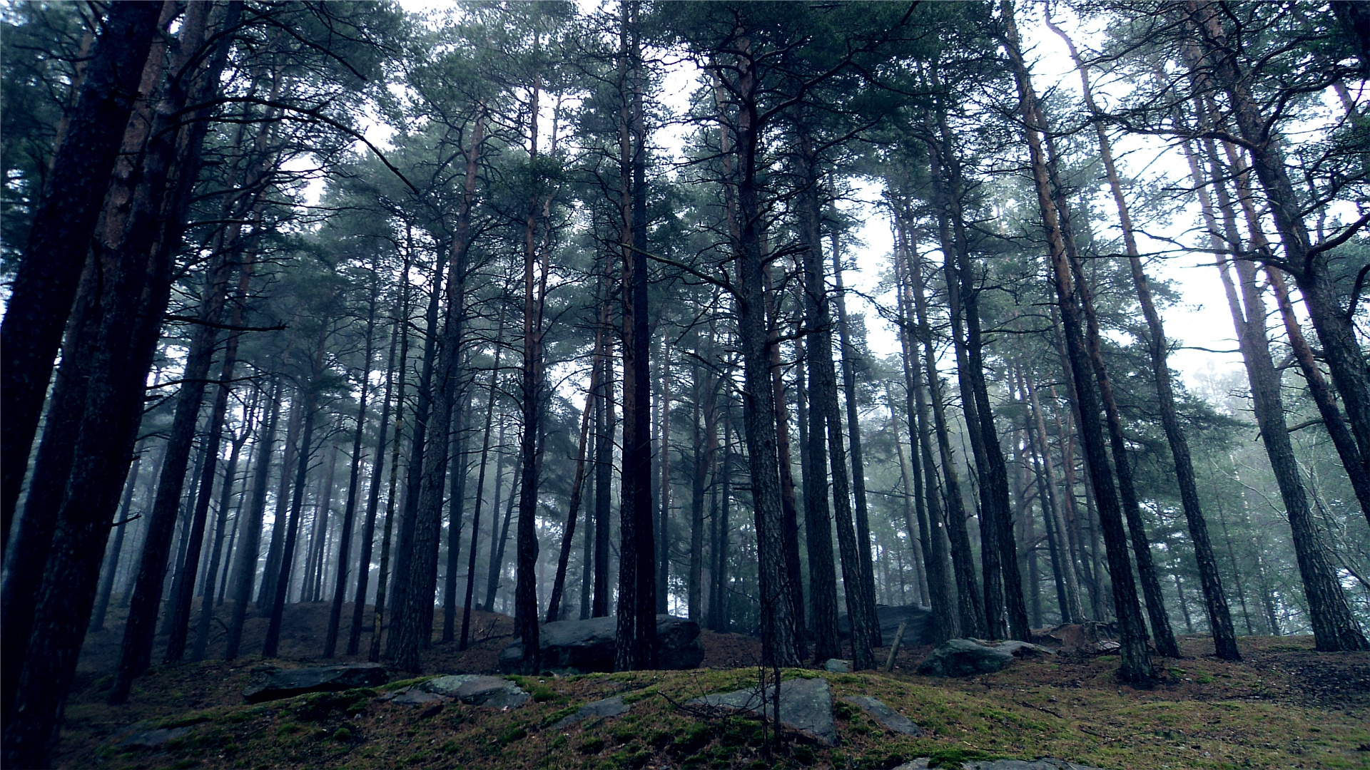 Fall Woodsy Pc Wallpaper Wallpaper Wood Trees Kroner Stones Gloomy Earth