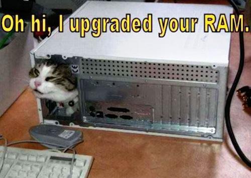 funnies upgraded ram cat