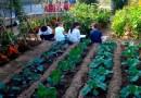 41 huertos urbanos convertirán el Sector III en un barrio más verde