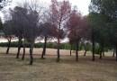 Piden que se tomen medidas para evitar la pérdida de pinos piñoneros enfermos en el Parque de la Alhóndiga