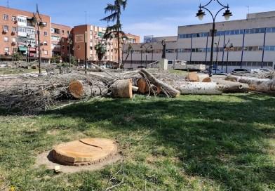 ASBio denuncia «la actuación desmedida» de tala de chopos en la plaza Severo Ochoa