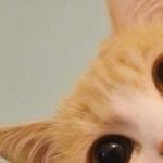 Profile picture of Chelsea Denila