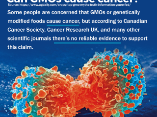 Can GMO cause cancer