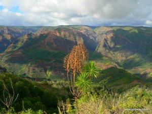 3-Kauai Waimea Canyon State Park 24