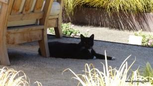 the guard cat