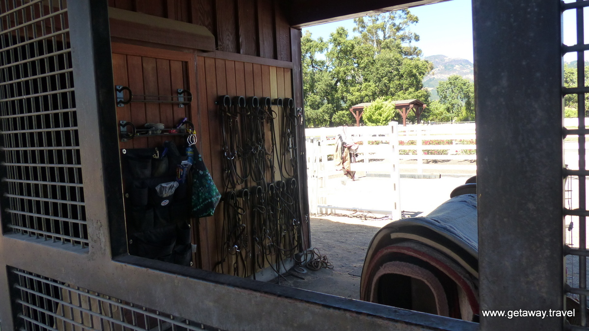Everything you need for horses
