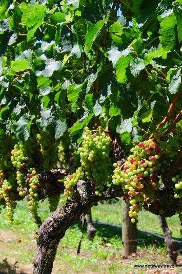 15-Te Awa winery Hawke's Bay 2-7-2011 4-18-56 PM