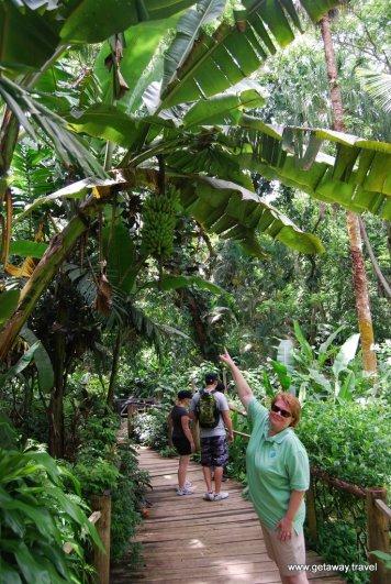 07-Garden of the Sleeping Giant Fiji 2-2-2011 3-03-13 PM
