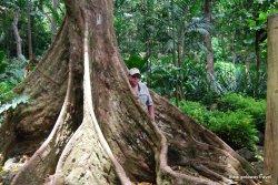 14-Garden of the Sleeping Giant Fiji 2-2-2011 3-15-15 PM