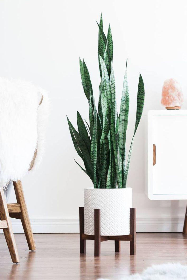 Excited vintage plant stand #diyplantstandideas #plantstandideas #plantstand