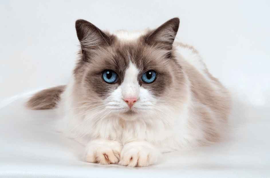 Amazing Cat Anatomy You Have to know | A Cat Can Not Sweat