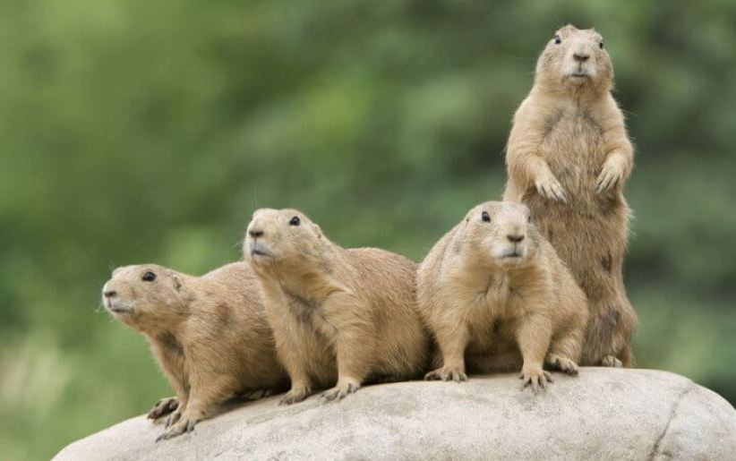 Beautiful common animals that start with the letter u #animalsthatstartwithu
