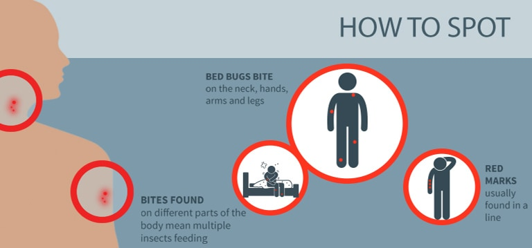 How To Prevent Bringing Bed Bugs Home From Work