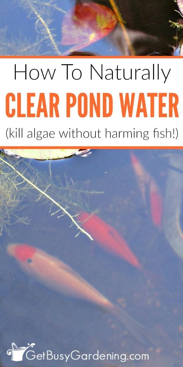 Plants Around Fish Pond