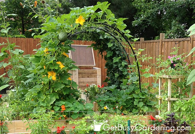 vertical vegetable garden #10