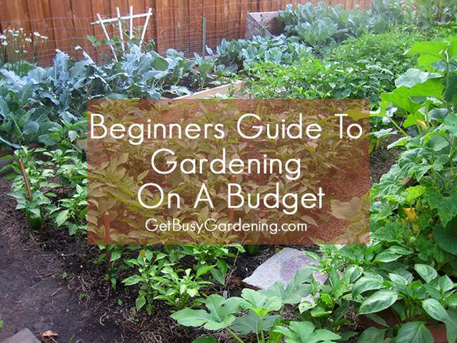 Guide To Gardening On A Budget