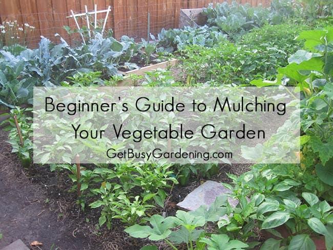 Beginner's Guide To Mulching Your Vegetable Garden