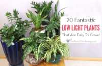 20 Low Light Indoor Plants That Are Easy To Grow - Get ...