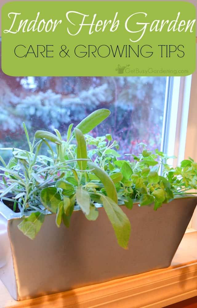 Kitchen Herb Garden Kit