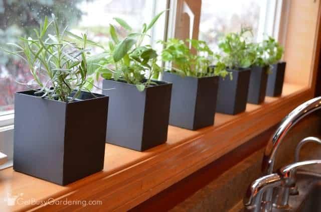 Indoor Kitchen Herb Garden  Get Busy Gardening