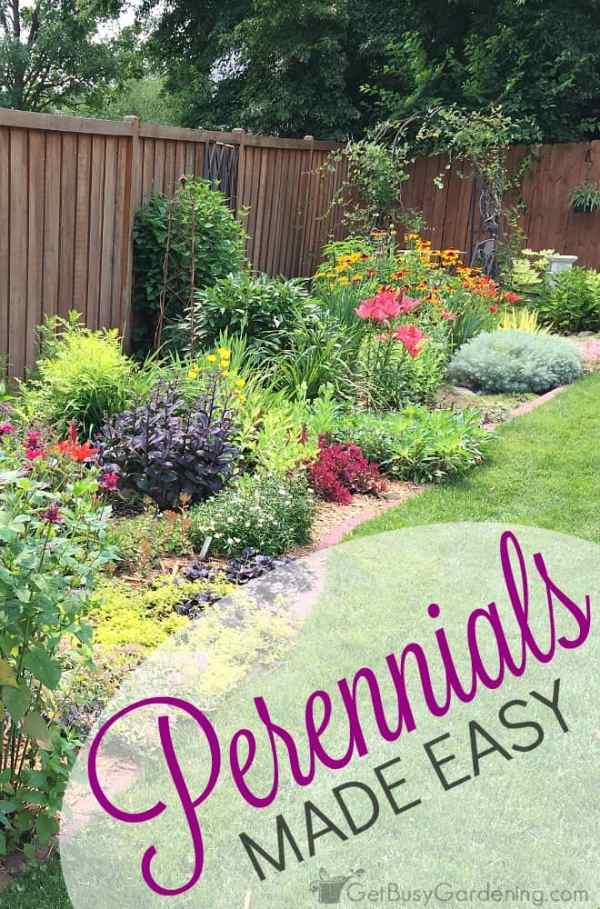 perennials easy create