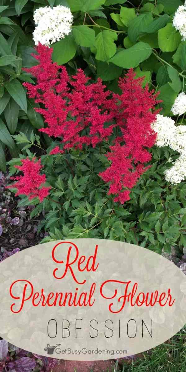 Red Perennial Flower Obsession! Get Busy Gardening