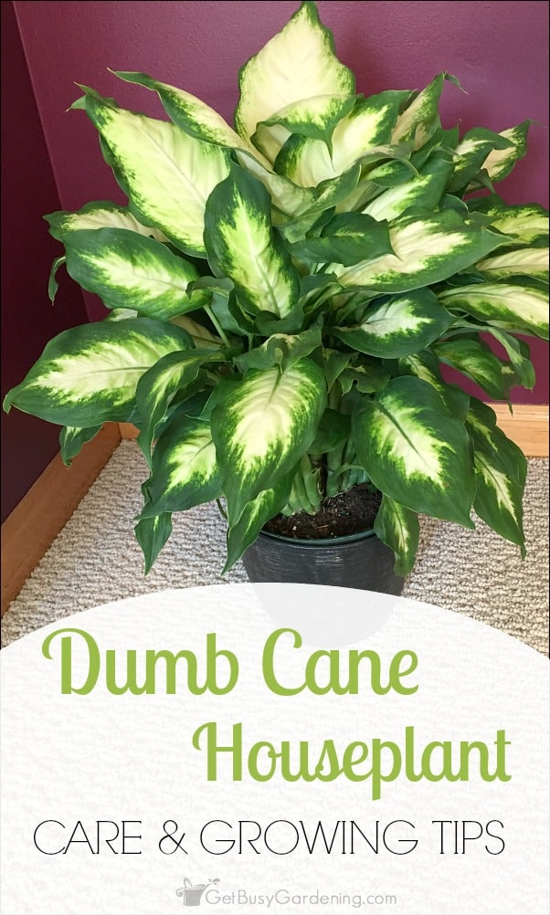 Easy Take Care Houseplants